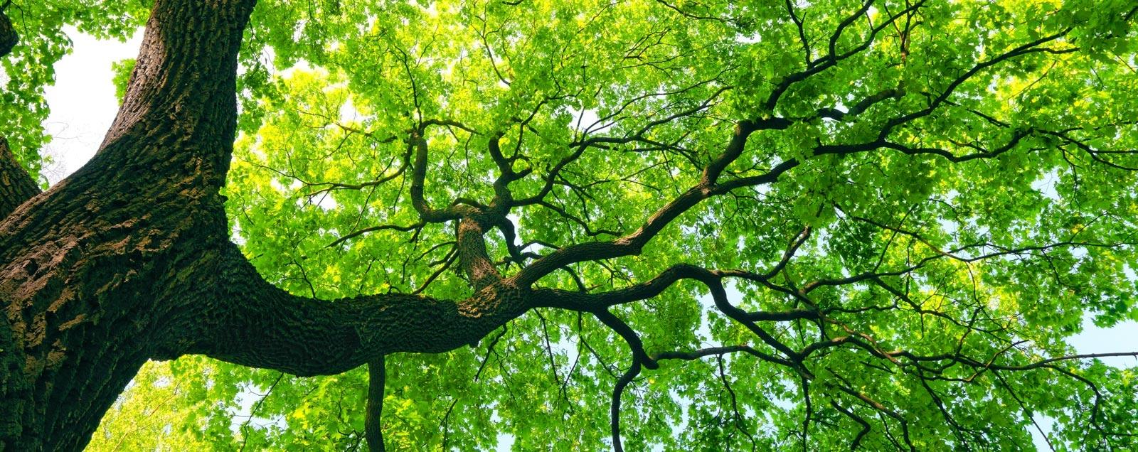 tree-care
